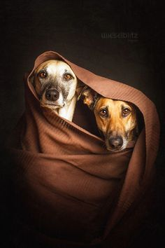 Photograph Twosome by Elke Vogelsang on 500px