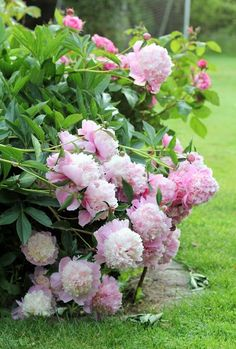 Idea Of Making Plant Pots At Home // Flower Pots From Cement Marbles // Home Decoration Ideas – Top Soop Beautiful Flower Quotes, Beautiful Rose Flowers, Amazing Flowers, Beautiful Gardens, Peonies Garden, Pink Garden, Shade Garden, Flower Farm, Flower Pots