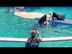 A Day in the Life of Lolita, the Performing Orca - YouTube. https://www.youtube.com/watch?v=X6EzCHKpWvo #SeaShepherd #defendconserveprotect