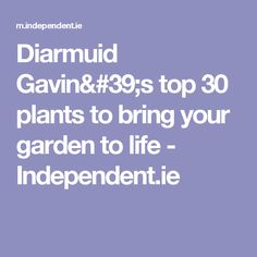 Diarmuid Gavin's top 30 plants to bring your garden to life - Independent.ie