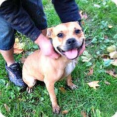 Norfolk Va Dog Adoption