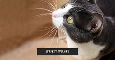 Weekly Wishes 12 & Wrap-Up - A Classic Notion