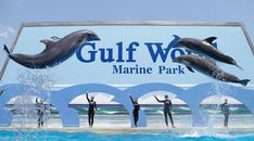 Welcome to Gulf World Marine Park in Panama City Beach, Florida, a place for the whole family to explore. Enjoy daily live shows featuring dolphins, sea lions, Panama City Beach Attractions, Panama City Beach Florida, Florida Vacation, Florida Travel, Panama City Panama, Florida Beaches, Seaside Florida, Florida Sunshine, Visit Florida