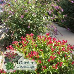All About Garden Crossings The West Michigan Center In Zeeland Specializing Annuals Perennials And Proven Winners