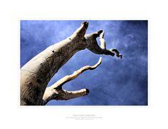 Fotografía de Naturaleza by Juan do Cervantes, via Behance