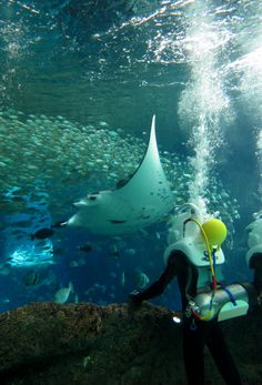 Want to trek alongside the magnificent marine animals in the world's largest aquarium?