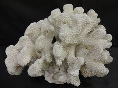 Coral Piece #inlarariastudio #inspo