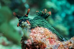 Beautiful Nudibranchs by Tamaico De Pooter on 500px