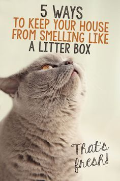 Keep Your House From Smelling Like Cat