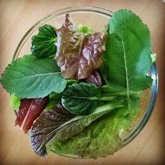 Cosecha de la azotea de Imepp para la #ensalada del día. #huerto #urbanfarming #organic #lechuga #kale #tatasoi #mostaza #salad #lettuce #sabroso #Aguascalientes #Ags #SanMarcos #Imepp_ac http://ift.tt/1Na9zBi