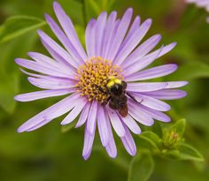 Even if you feel like the honeybee decline is hopeless, here's what you can do to help protect bee species of all kinds.
