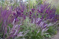 Ein Traumgarten in Violett: Salvia and Allium by geraldine Garden Spaces, Garden Plants, Plant Design, Garden Design, Purple Garden, Garden Borders, Ornamental Grasses, Salvia, Dream Garden