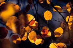Все-таки осень — волшебница;)) Фотографии Джони Ниемела (Joni Niemelä) — Фотоискусство