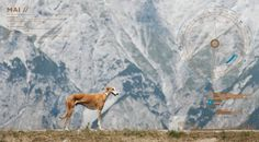Greyhound solitude