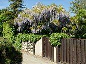 Aby vistárie nádherně kvetly, potřebují správný řez, radí botanik Pergola, Fruit, Plants, Gardening, Pictures, Outdoor Pergola, Lawn And Garden, Plant, Planets