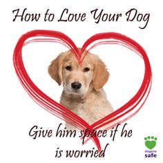 Family Friendly Dogs, Family Dogs, Dogs And Kids, All Dogs, Dog Training Books, Crazy Dog Lady, Dog Behavior, Teaching Kids, Glamping