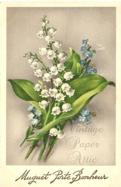 Lily of the Valley Cottage Floral Illustrations, Botanical Illustration, Etiquette Vintage, Lily Of The Valley Flowers, Decopage, Australian Native Flowers, Floral Artwork, Retro Art, Flower Pictures