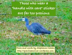"""Those who wear a """"handle with care"""" sticker are far too precious Stephanie Mohan - October 2014 </photo by Stephanie Mohan"""
