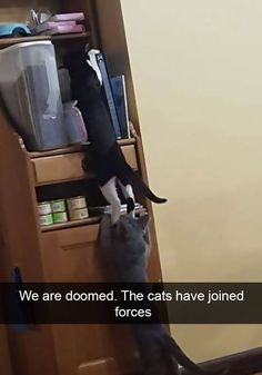 10+ Hilarious Cat Snapchats That Are Im-paw-sible Not To Laugh At #funny #cute #cat