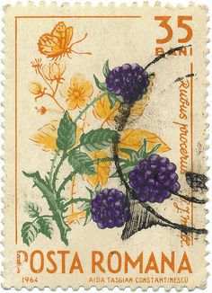 1964 Romanian Stamp - Blackberry by alexjacque, via Flickr
