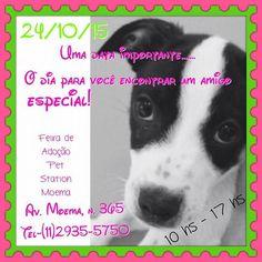 BONDE DA BARDOT: SP: Campanha de adoção de animais em Moema acontece neste sábado (24/10) .