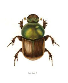 https://flic.kr/p/8UwRw2   Onitis alexis   (watercolour on paper)
