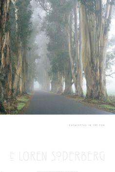 Euclyptus in the Fog Print by Soderberg at Art.com