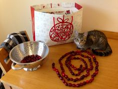 String Cranberries together to make a garland for the Christmas tree. (Kittens do not make good helpers)