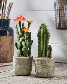 Buy Cactus Set x 2 Artificial Tabletop Plants at Petals art garden indoor plants Cactus House Plants, Indoor Cactus, Cactus Decor, Indoor Plants, Cactus Art, Mini Cactus Garden, How To Grow Cactus, Buy Cactus, Cactus Flower