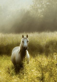 In the mist. All The Pretty Horses, Beautiful Horses, Animals Beautiful, Cute Animals, Unusual Animals, All About Horses, Majestic Horse, Horse Pictures, Horse Love