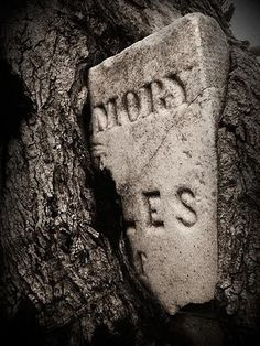 Fresh Pics: Spooky but Beautiful Photographs Taken in Graveyards