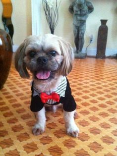 Lost Dog - Shih Tzu in BROOKLYN, NY      Pet Name:brownie (ID# 105129) Gender:Female Breed:Shih Tzu Breed 2:Yorkshire Terrier Color:Tan/Cream Pet Size:Small (10-19lbs) Pet Age:5 Date Lost:08/29/2015 Zip Code:11207 (BROOKLYN, NY) See All Lost Dogs In BROOKLYN, NY