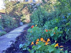 Oranje gele kant van de tuin