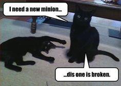 Need a new minion