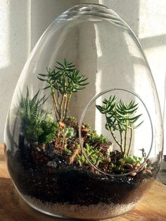 Awesome Bonsai Terrarium On The Jars 9