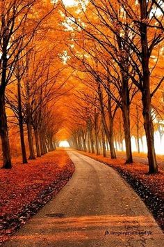 Top 29 Woonderful Paths-Autumn Path-Photo by Lars Van Der Goor Beautiful World, Beautiful Places, Beautiful Scenery, Beautiful Landscapes, Beautiful Roads, Stunning View, Autumn Scenes, Belle Photo, Paths