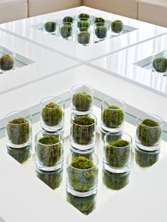 Clear cylindrical glasses with a moss ball in each are displayed on Kelly Hoppen tables.  http://www.kellyhoppen.com/shop-by-type/books-and-pictures/kelly-hoppen-design-masterclass-how-to-achieve-the-home-of-your-dreams