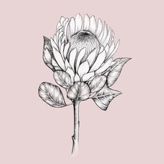 Protea on pink. Botanical Art Drawing, Drawings, Drawing Illustrations, Wreath Drawing, Protea Art, Flower Drawing, Lino Art, Flower Sketches, Flower Illustration