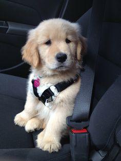 Annie the puppy