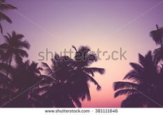 Find palm trees california sunset stock images in HD and millions of other royalty-free stock photos, illustrations and vectors in the Shutterstock collection. Thousands of new, high-quality pictures added every day. California Palm Trees, California Sunset, Minimal Photo, Sunset Images, Royalty Free Stock Photos, Cards Against Humanity, Clouds, Illustration, Pictures