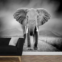 Het fotobehang Olifant zwartwit geeft een stoere uitstraling aan jouw muur. | Het fotobehang is op maat en in verschillende typen behang verkrijgbaar. Gratis digitale drukproef. #vliesbehang #fotobehang #zelfklevend #behangen #behang #muurdecoratie #fotomuur #fotowand #diy #vlies #print #foto #muur #interieur #opmaat #maatwerk #olifant #dier #wild #wildlife #closeup #afrika #afrikaans #zwartwit