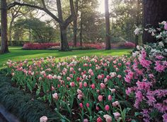 If only this picture did the actual garden justice. Taken from the Bayou Bend home in Houston, Texas -- featured on the Azalea Trail every year.