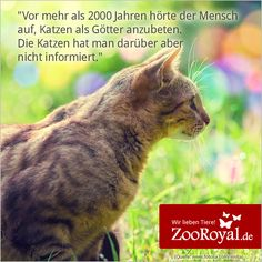 So ist es oder :D? #cats #welovecats #catsofgoogleplus #ZooRoyal