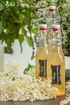 Selbstgemachter Holunderblütensirup ohne Zitronensäure Elderflower syrup without citric acid Ginger & Lemon Syrup – natural wonder weaponGinger lemon honey syrup (with receipt of delicious recipes for homemade detox water Summer Drinks, Cocktail Drinks, Cocktails, Healthy Eating Tips, Healthy Drinks, Detox Drinks, Citric Acid, Vegetable Drinks, Elderflower