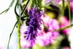 Blume Blumen Blüten Blossom Flowers Flower Lila Purple Hearts Herzen Herz Heart Love Liebe Nature Natur Detail Details Macro Makro Fotografie Photography Flora Flower Power Garten Garden Blossom Bloom Pink Rosa