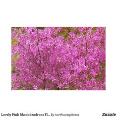 Lovely Pink Rhododendrons Floral Acrylic Wall Art