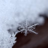 Snow flake...pretty. I can't resist trying to catch one on my tongue!