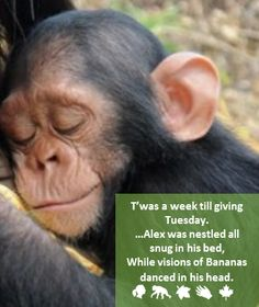 #GivingTuesday - Jane Goodall Canada