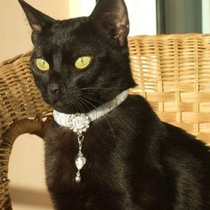 Princess Liberty is totally getting one of these soon :] ~ Snow White Cat Collar with a Touch of Silver by TheGlamorousCat, $18.50