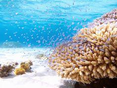 全部沖縄のせいだ。本当に美しい沖縄の極上ビーチ9選 | RETRIP